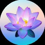 Leuchtenene pink lila Lotusblume auf buntem Hintergrund